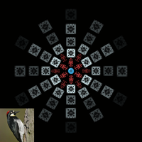 Screenshot of woodpecker design